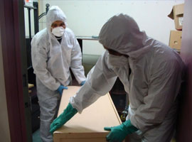 mould removal toronto